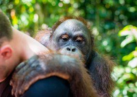 Bridgewater Borneo expedition 2020